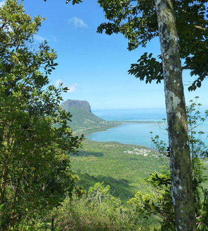 Hike View - Mauritius - Ebony Forest