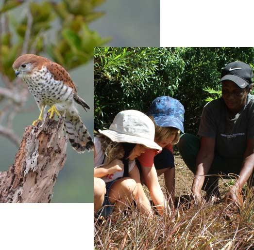 Primary Children Planting - Ebony Forest - Mauritius