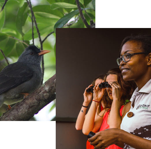 Bird Watching - Ebony Forest - Mauritius