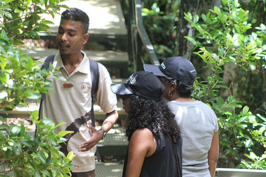 Guided Walk - Ebony Forest - Mauritius