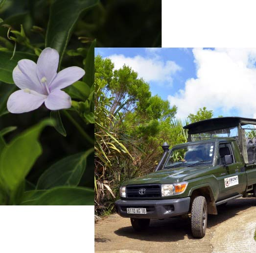 Private Tour in Safari Jeep - Ebony Forest - Mauritius